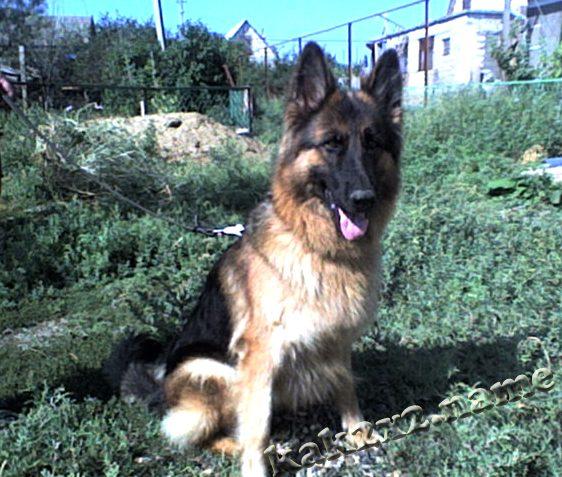 Поводки для собак: какие бывают и какой выбрать?