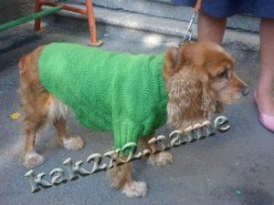 Жакет для собаки